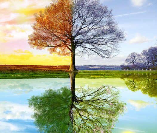 4_Seasons_by_WhiteSpiritWolf